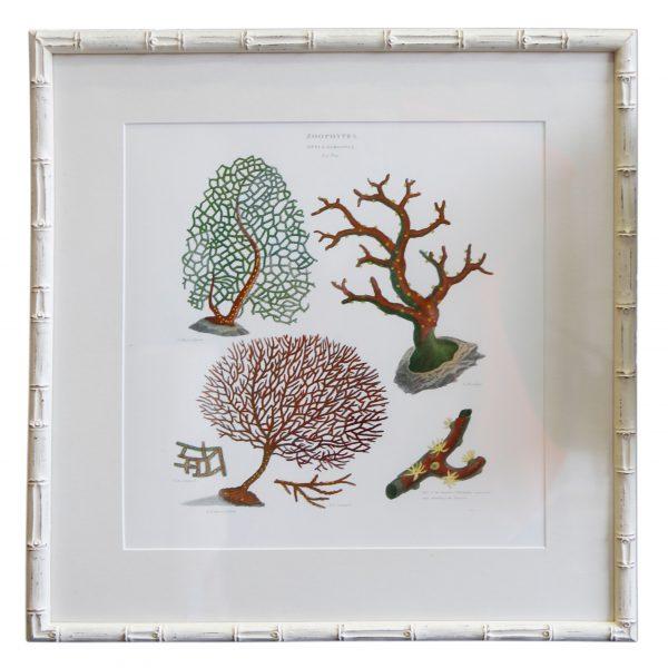 Coral Art I