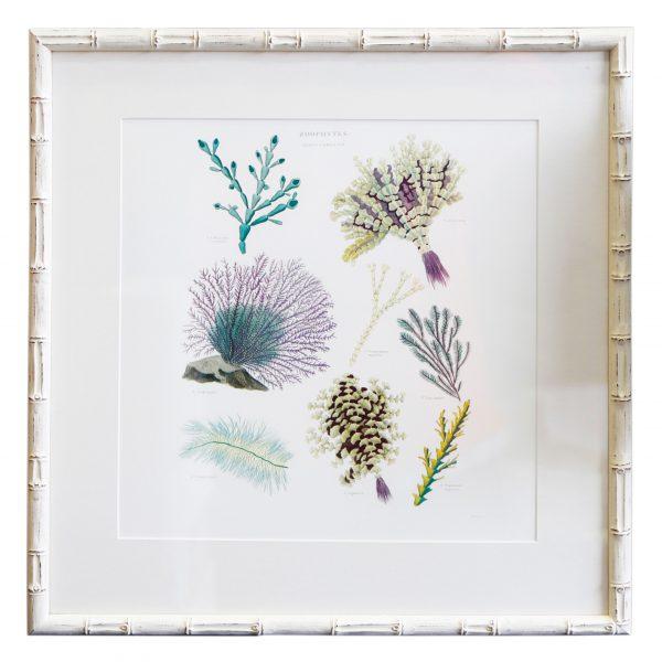 Coral Art II
