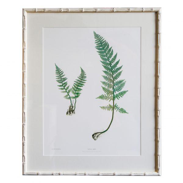 Plant Artwork XVIII - Original