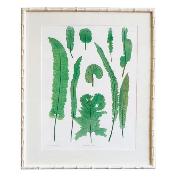 Plant-XLII-White-Bamboo-Frame-1200×1200